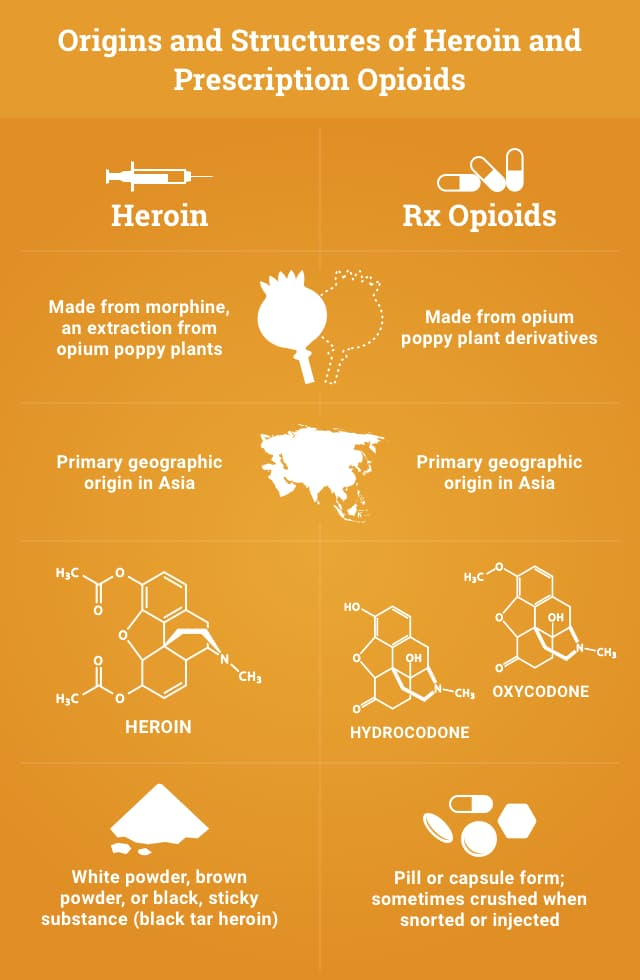 Origins and Structure of Heroin and Rx Opioids Copy