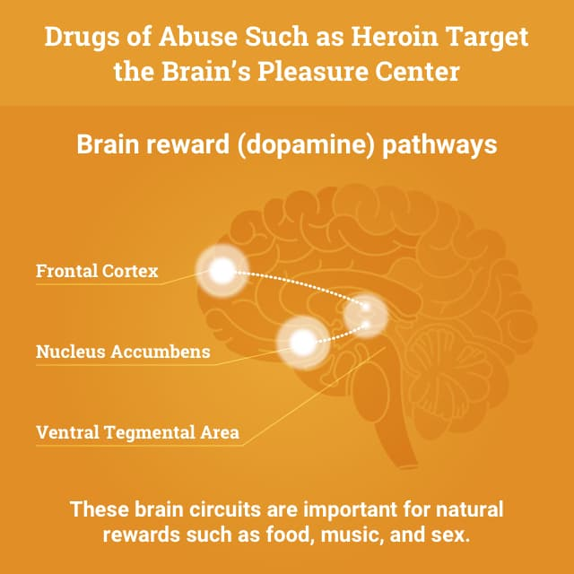 Drugs of Abuse Such as Heroin Target the Brain's Pleasure Center
